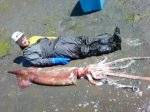 Downey with Humboldt Squid 3
