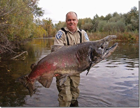 chinook-giant-salmon-battle-creek-1-emailsize