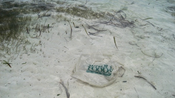 Whole foods bag in belize
