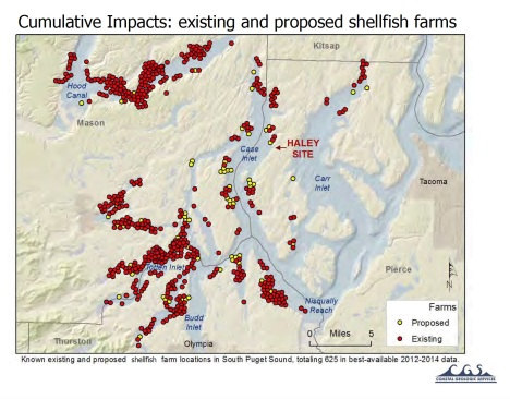 cumulative impacts of shellfish farms